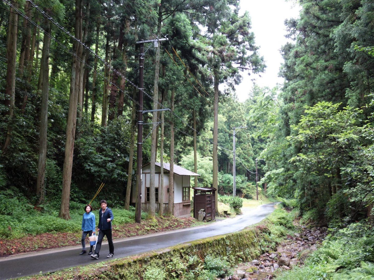 Forest around Ryugenji Mabu Mine Shaft