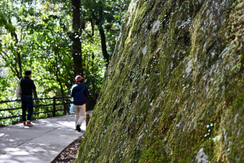 苔むした岩壁