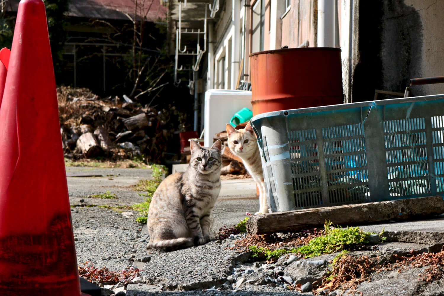 Cats near Yumichi
