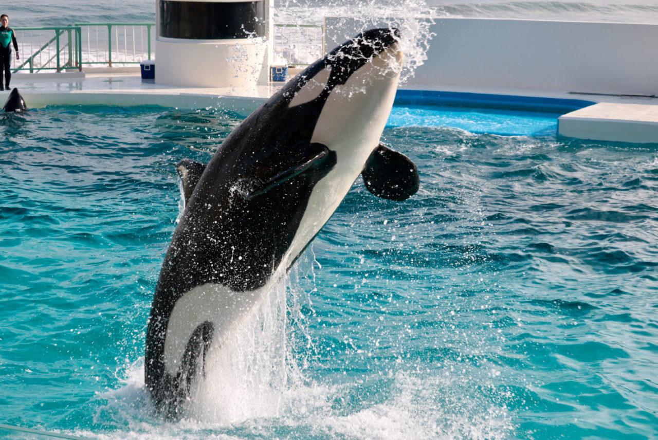「鴨川シーワールド」で海の動物たちを思う存分満喫しちゃおう