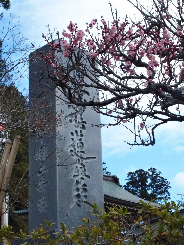 清澄寺の正門そばの梅の木