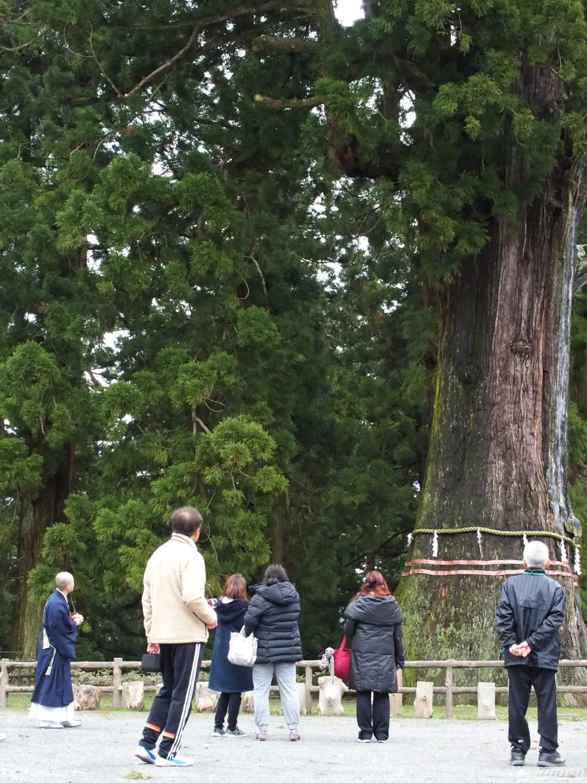 Thousand Year Cedar of Kiyosumi