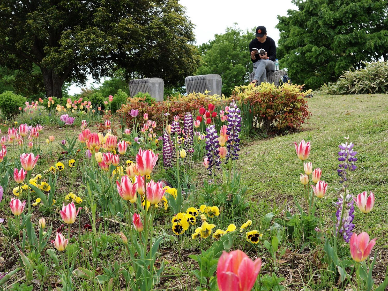 昭和記念公園 浮游の庭
