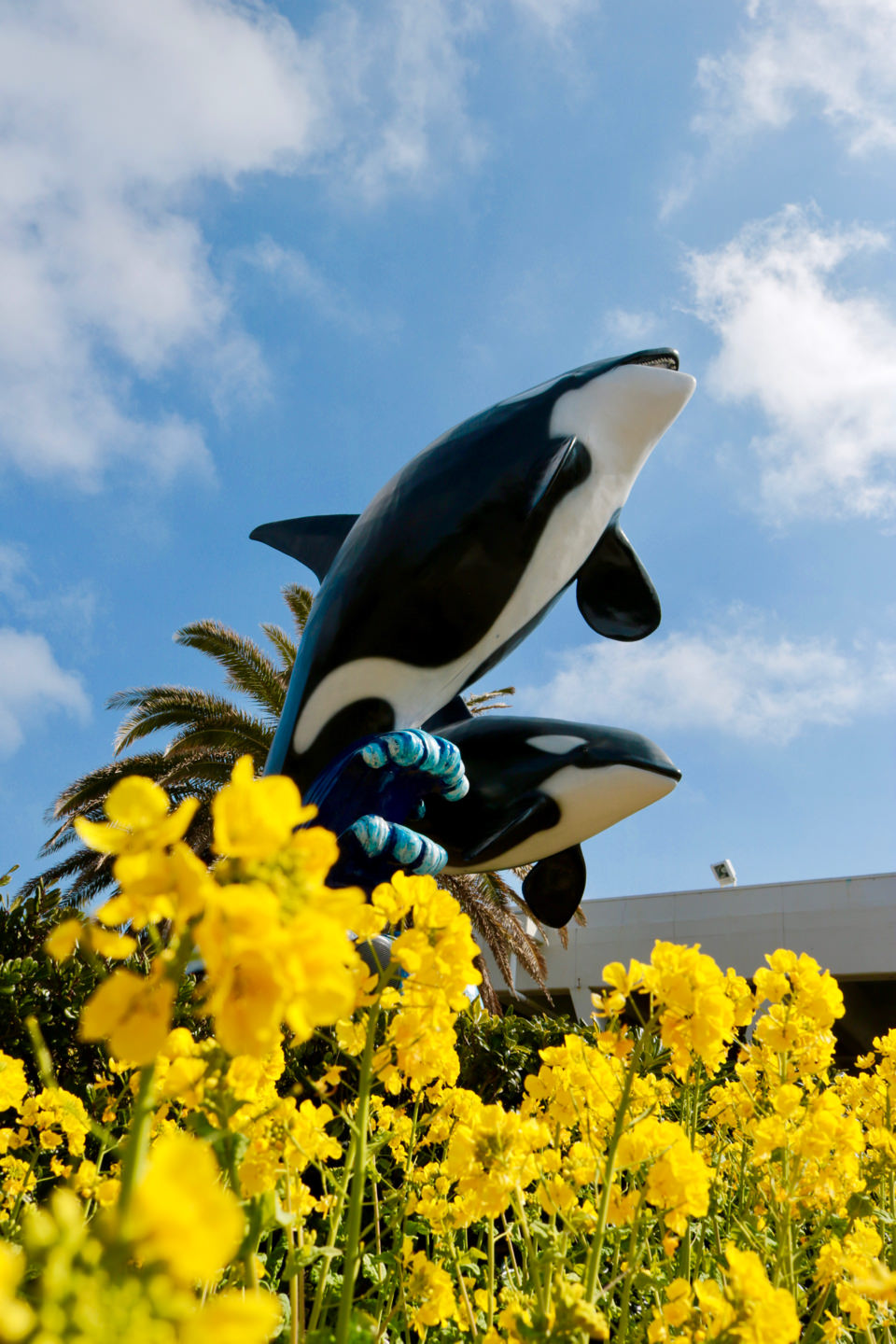 Canola flowers and killer whale statues at the entrance to Kamogawa Sea World