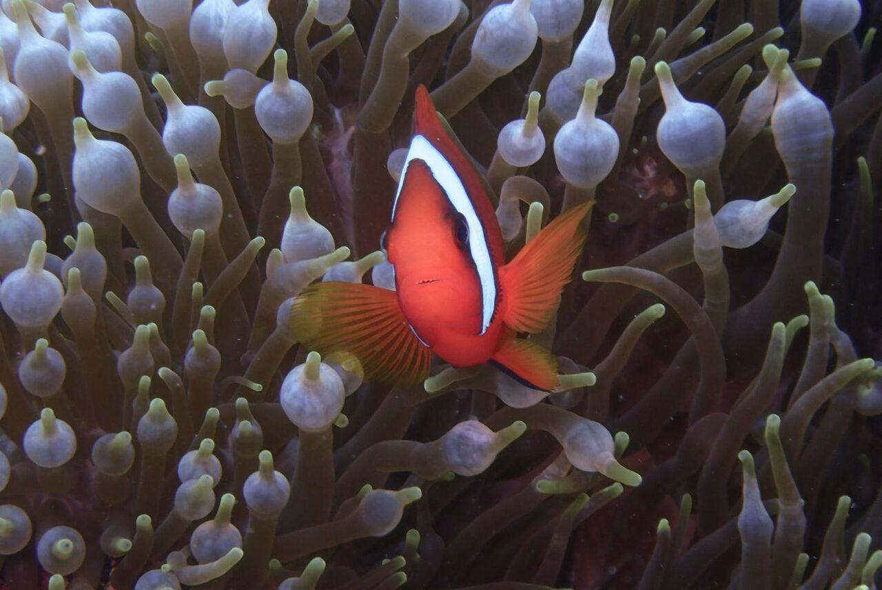 新江ノ島水族館が『おひとりさま』に限定した夜の水族館イベントを開催