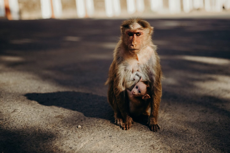brown monkeys on gray concrete floor